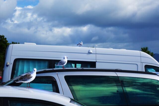 Kiwi Road Trip - 2015