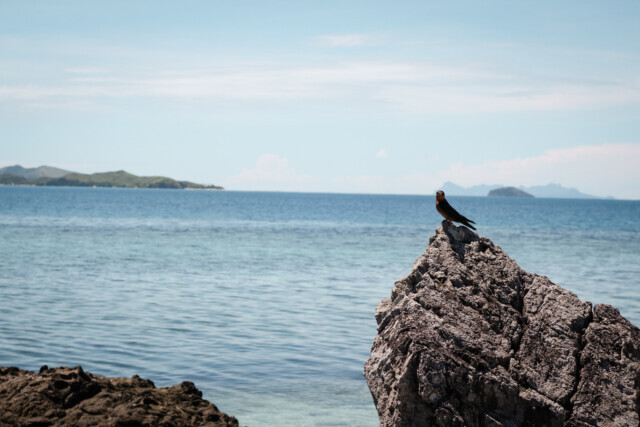 Fiji Time - 2015