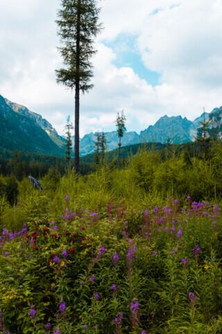 High Tatras - 2018